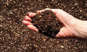 Kompost Nedir (Mantar Üretimi)