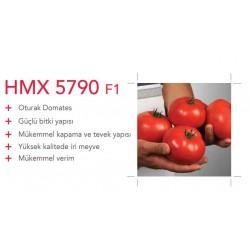 HMX 5790 F1 Oturak Domates Fidesi
