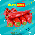 Kapya Biber