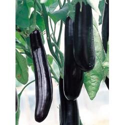 Faselis F1 Uzun Patlıcan Fidesi