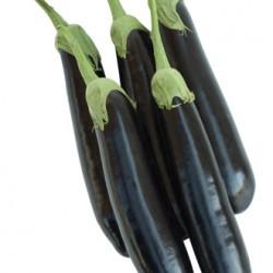 Sicilia F1 Patlıcan Fidesi