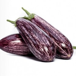 Kırçıl F1 Silindirik Patlıcan  Tohumu
