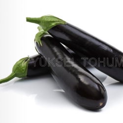 Yakut F1 Silindirik Patlıcan Fidesi