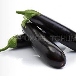 Yakut F1 Silindirik Patlıcan Tohumu