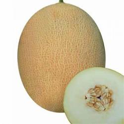 Arıkan F1 Ananas Tipi Kavun Tohumu